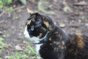 "a14 Tortie • <a style=""font-size:0.8em;"" href=""http://www.flickr.com/photos/99468393@N08/41428238782/"" target=""_blank"">View on Flickr</a>"