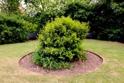 "round shrub • <a style=""font-size:0.8em;"" href=""http://www.flickr.com/photos/99468393@N08/18646452651/"" target=""_blank"">View on Flickr</a>"
